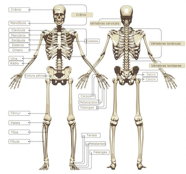 Outpatient And Spine Care Center also Bone densities likewise Details also 207 in addition 576093. on orthopedic cartoon bones