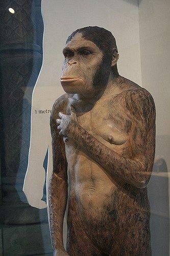 Representação do australopiteco em museu de história natural