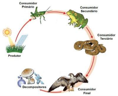Cadeia alimentar terrestre