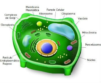 Célula vegetal e suas estruturas