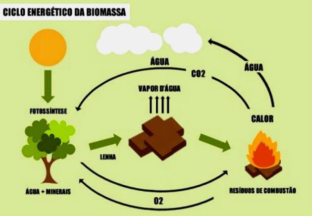 Ciclo de biomassa