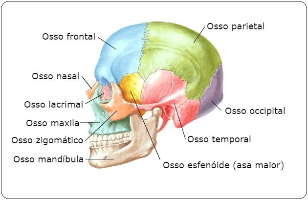 ossos do cranio e face