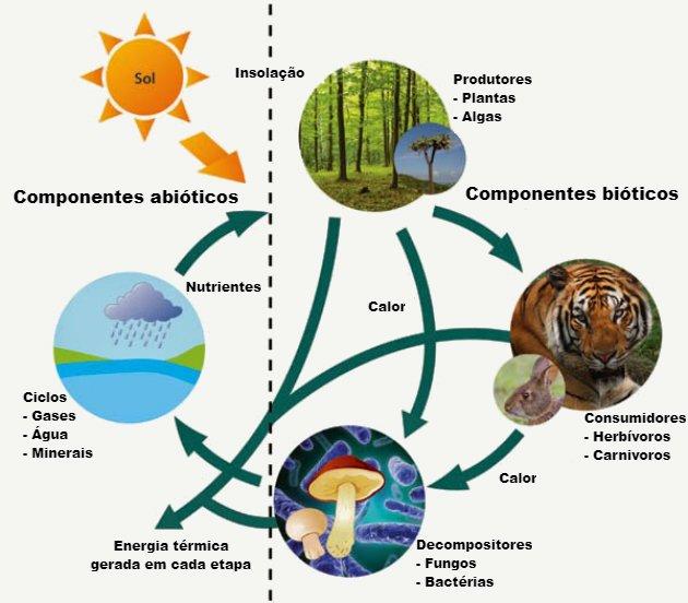 Qual significado de ecologia