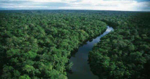 Resultado de imagem para Floresta Amazónica