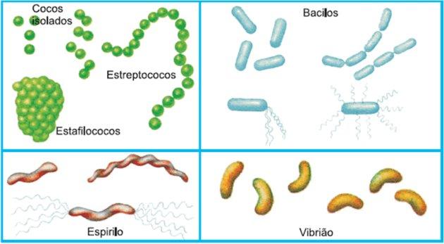 Formatos das bactérias