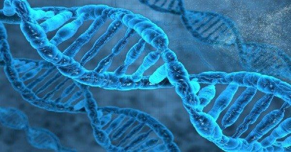 Hereditariedade e genetica