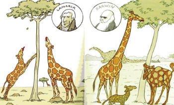 Teoria de Darwin e Lamarck