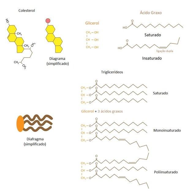 molécula de colesterol e do triglicerídio.