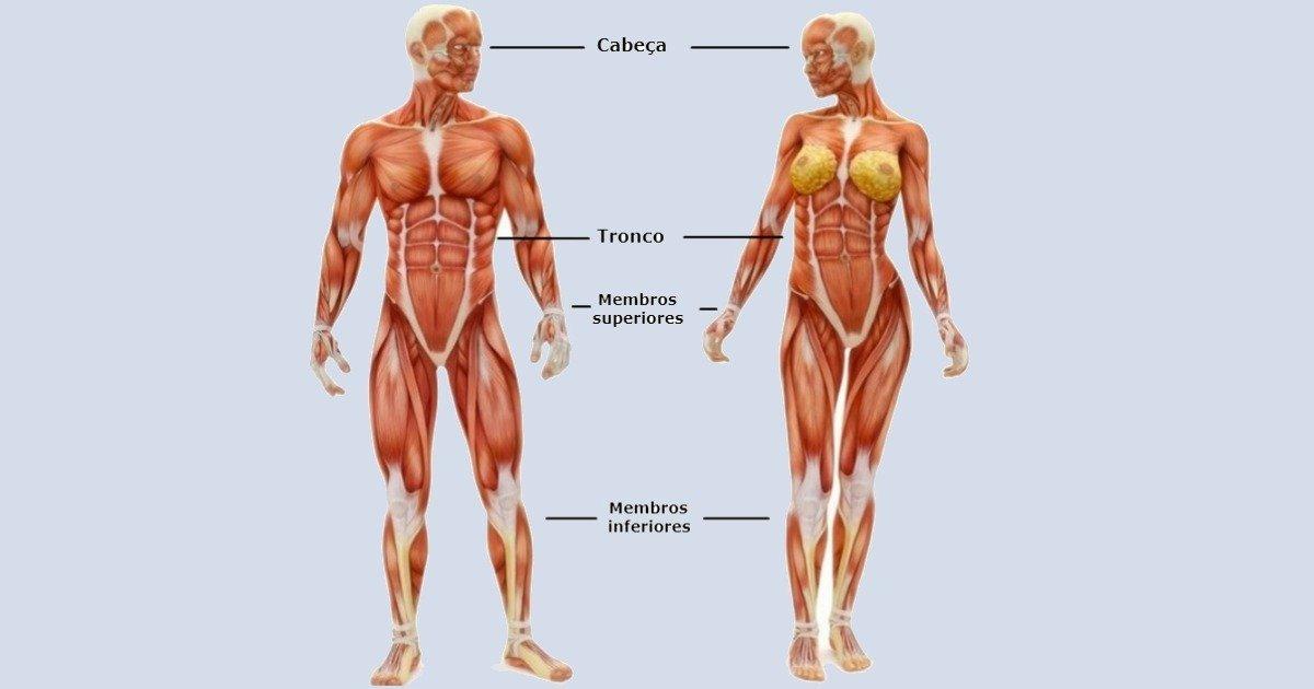 Membros do Corpo Humano - Toda Matéria
