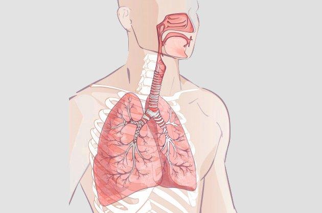 sistema respiratório geral