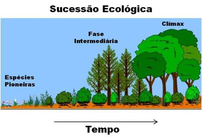As fases da sucessão ecológica